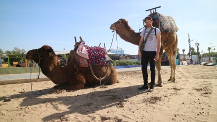 essaouira camels game of thrones location