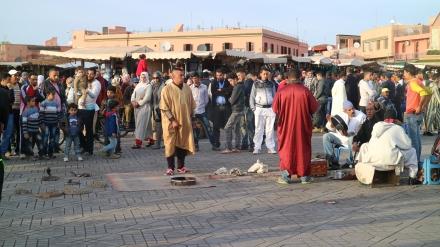 marrakesh snake charmers